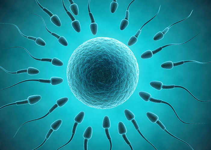 сперматозоида фото